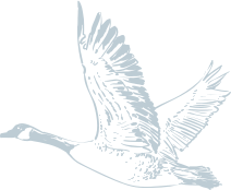 a line drawing of a bird