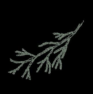 line drawing branch